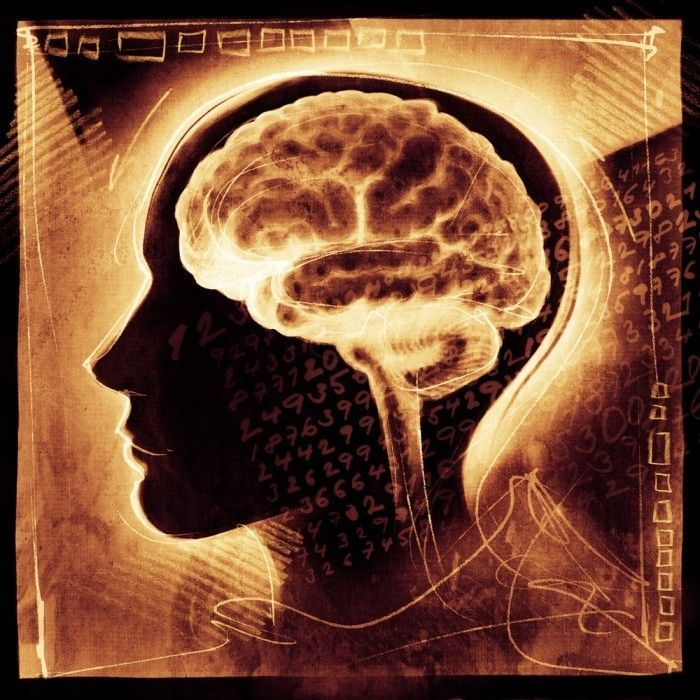 Питание для здоровья мозга
